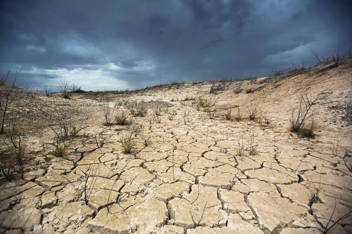 Kuivuutta Nevadassa kesällä 2014.