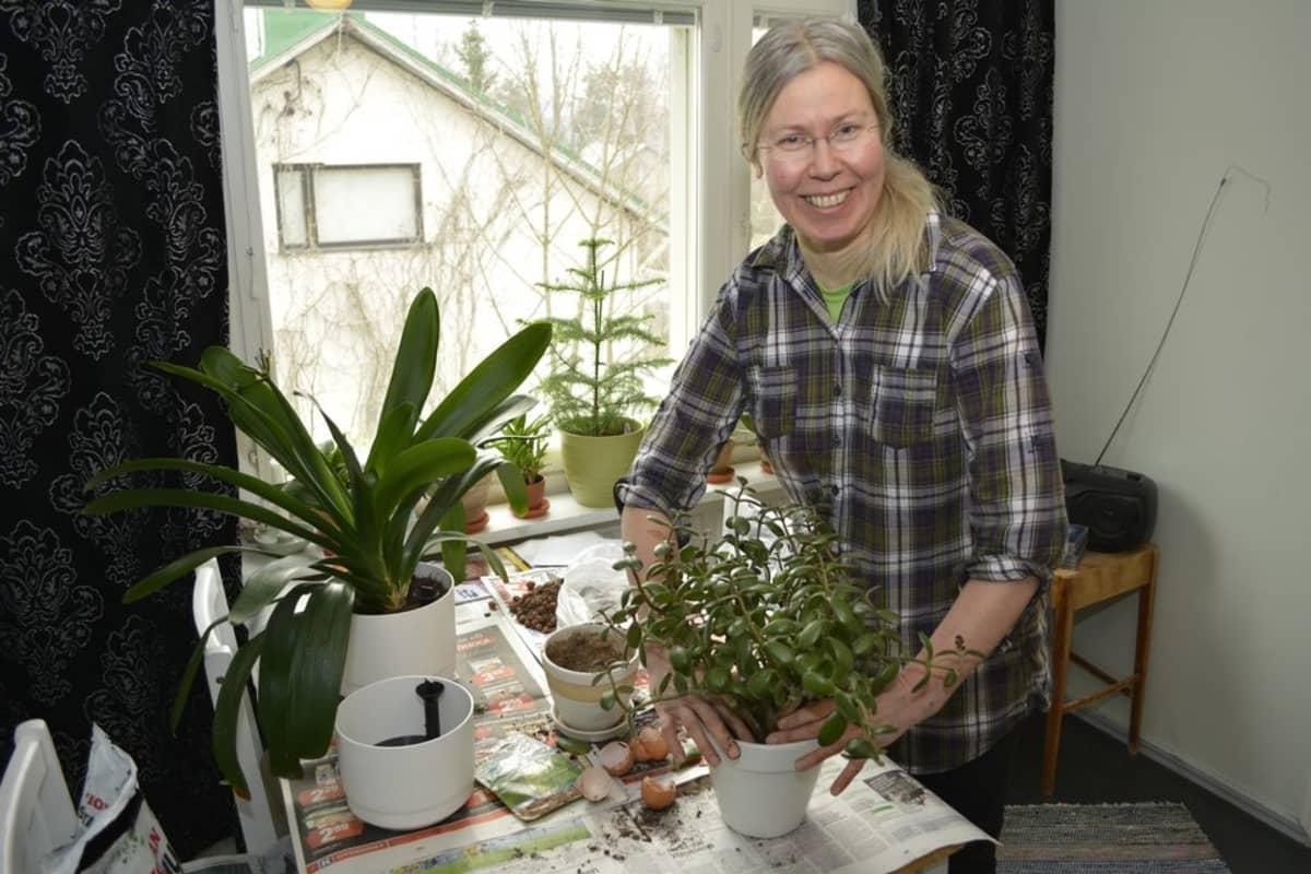 Puutarhuri vaihtaa viherkasvia uutteen ruukkuun