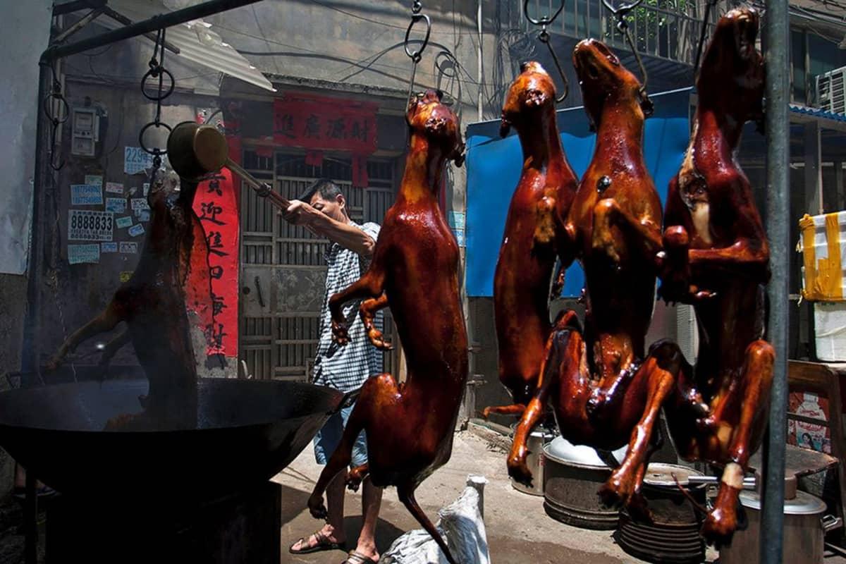 Yulinin kaupungissa Etelä-Kiinassa valmistettiin koiranlihaa vuosittaista koiranlihafestivaalia varten.
