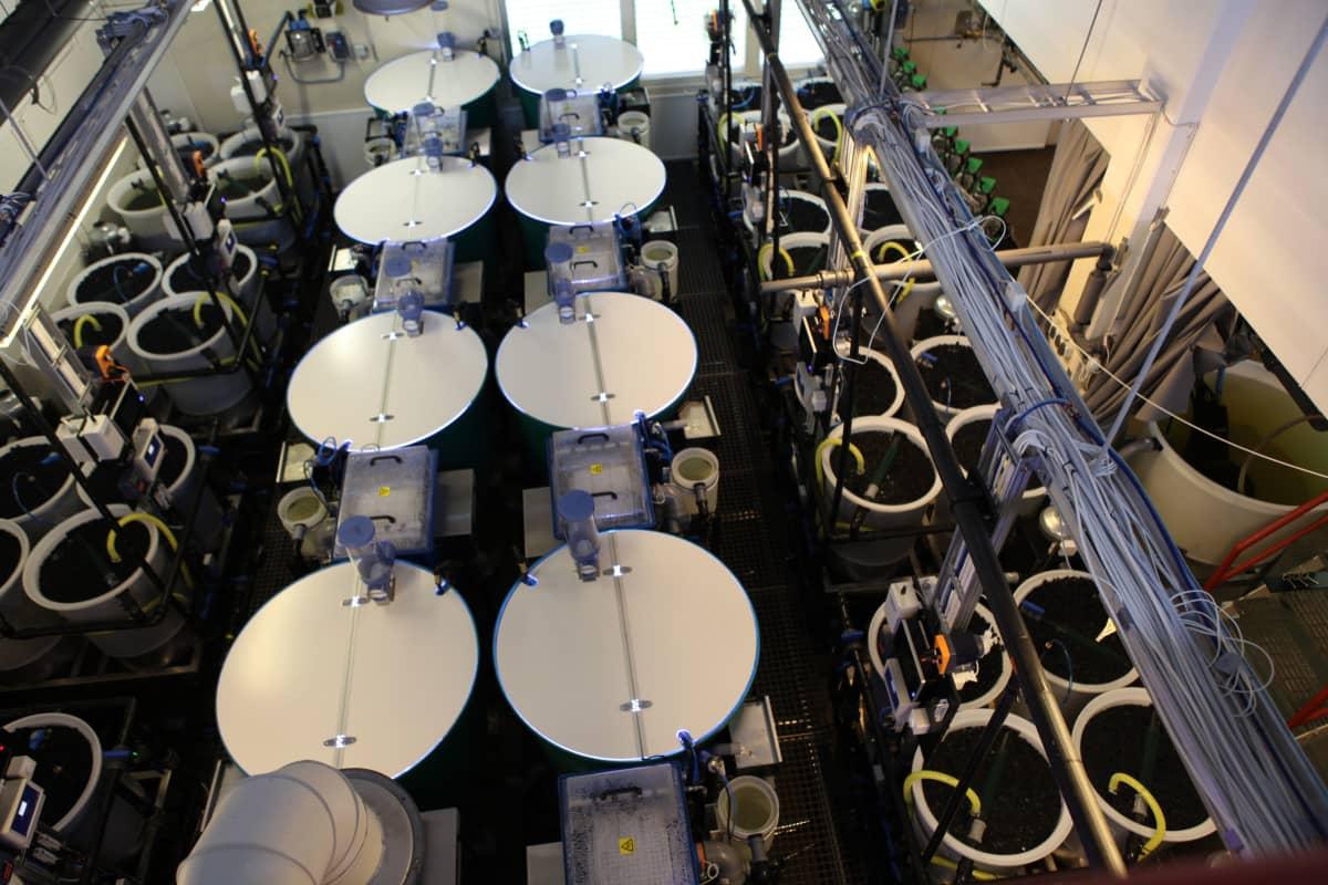 Luonnonvarakeskuksen kalanviljelylaitoksella Laukaassa kehitetään kalan kiertovesikasvatusta.