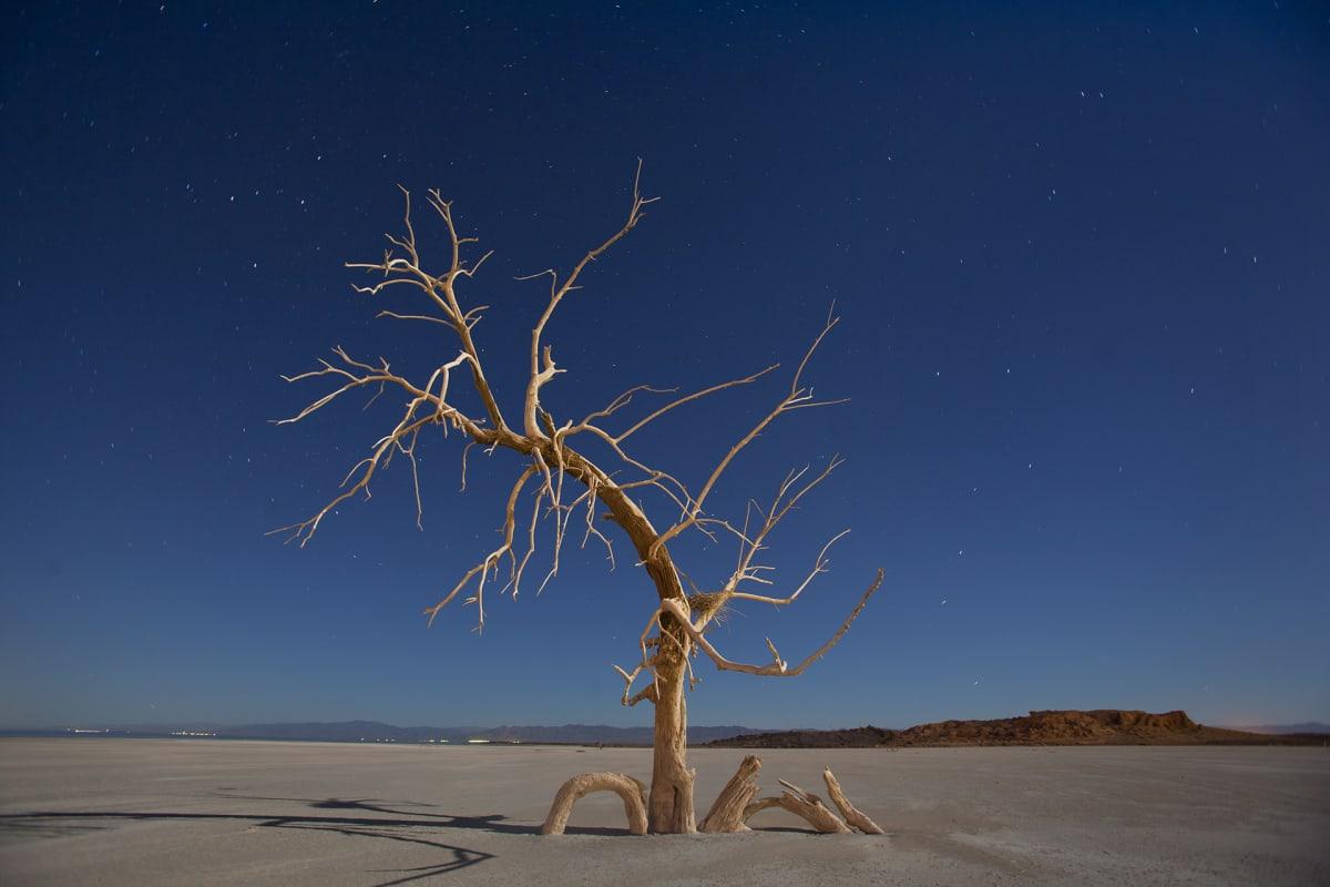 kuollut puu aavikolla kuunvalossa