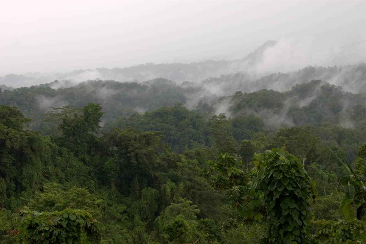 Manus-saari