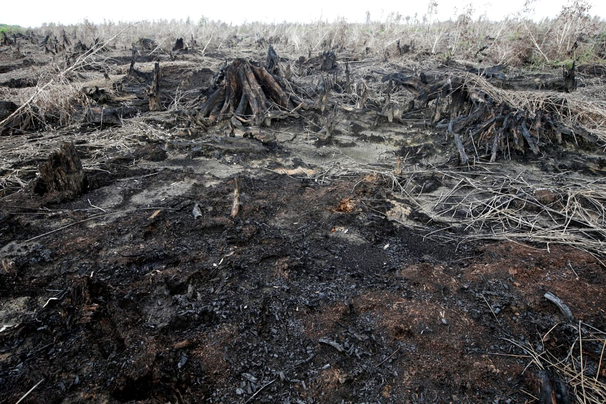 Palanutta metsää Indonesiassa.
