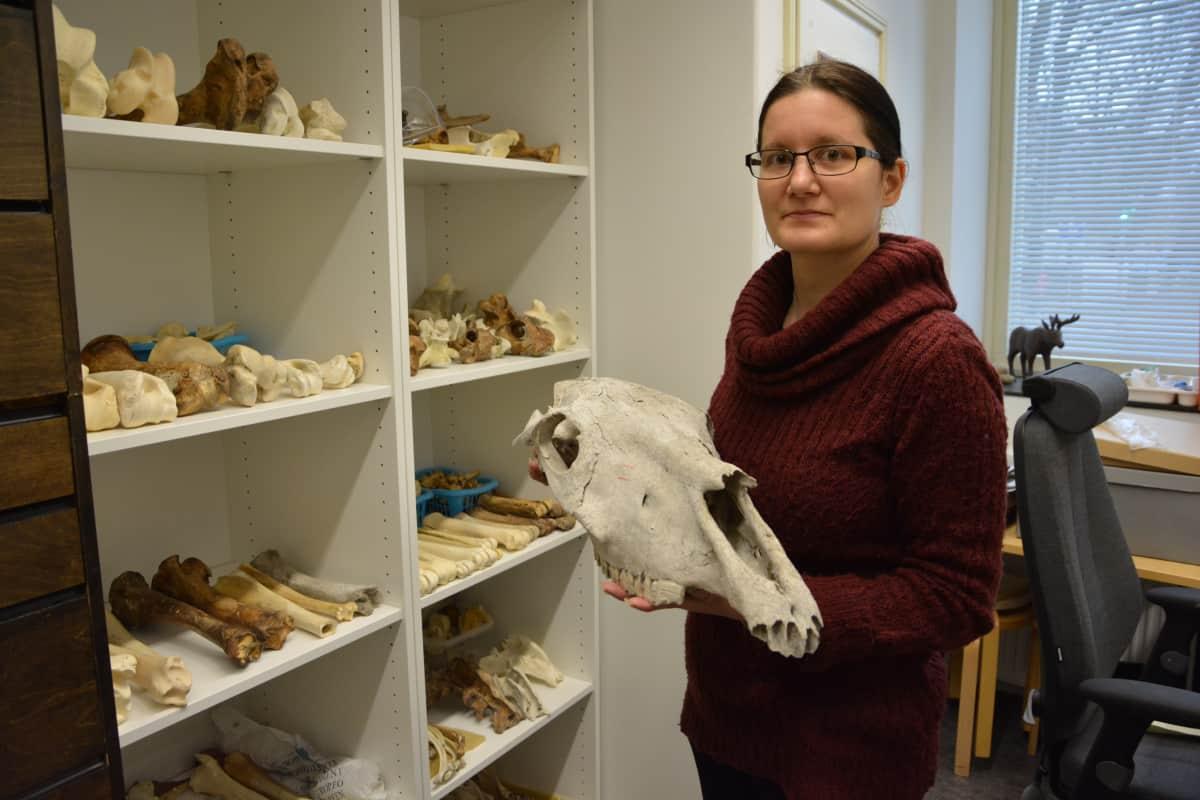 Sonja Hukantaival esittelee hevosen kalloa Turun Yliopistolla.