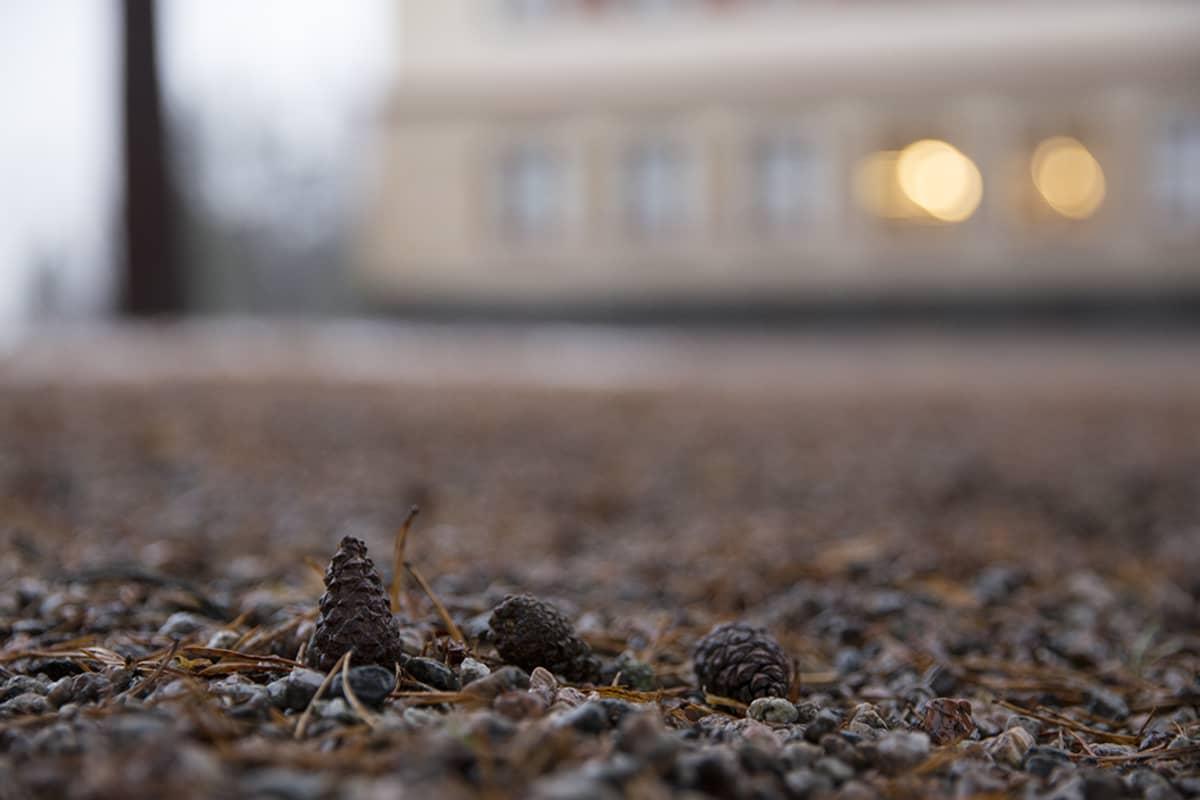 Kävyt ovat miltei kadonneet koulun pihalta Kaverikioskin avauduttua.