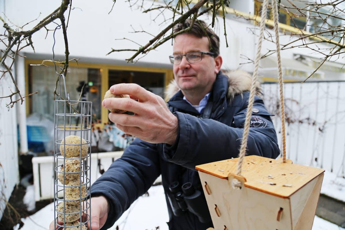 Aki Arkiomaa asettelee talipalloa oksasta riippuvaan ruokintatelineeseen.