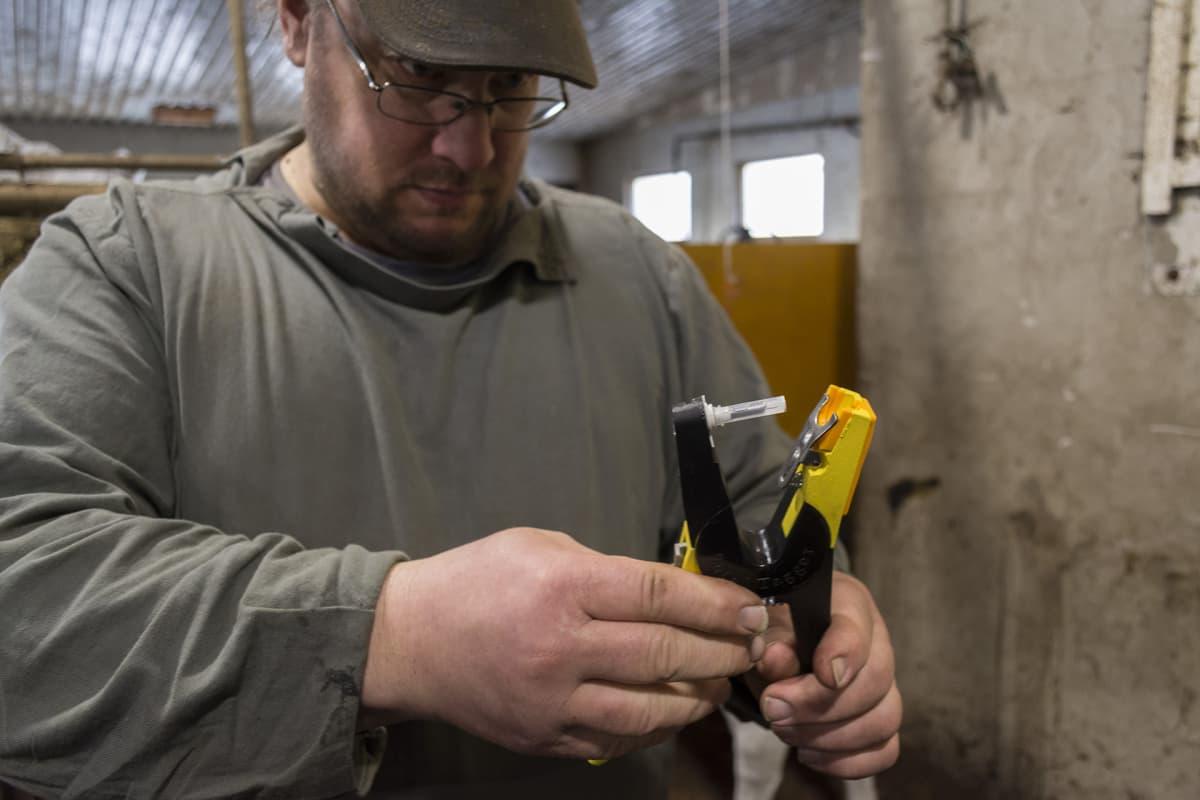 Iivonlahden maitotilan isäntä Matti Rönty näyttää genomitestaukseen käytettävää työkalua