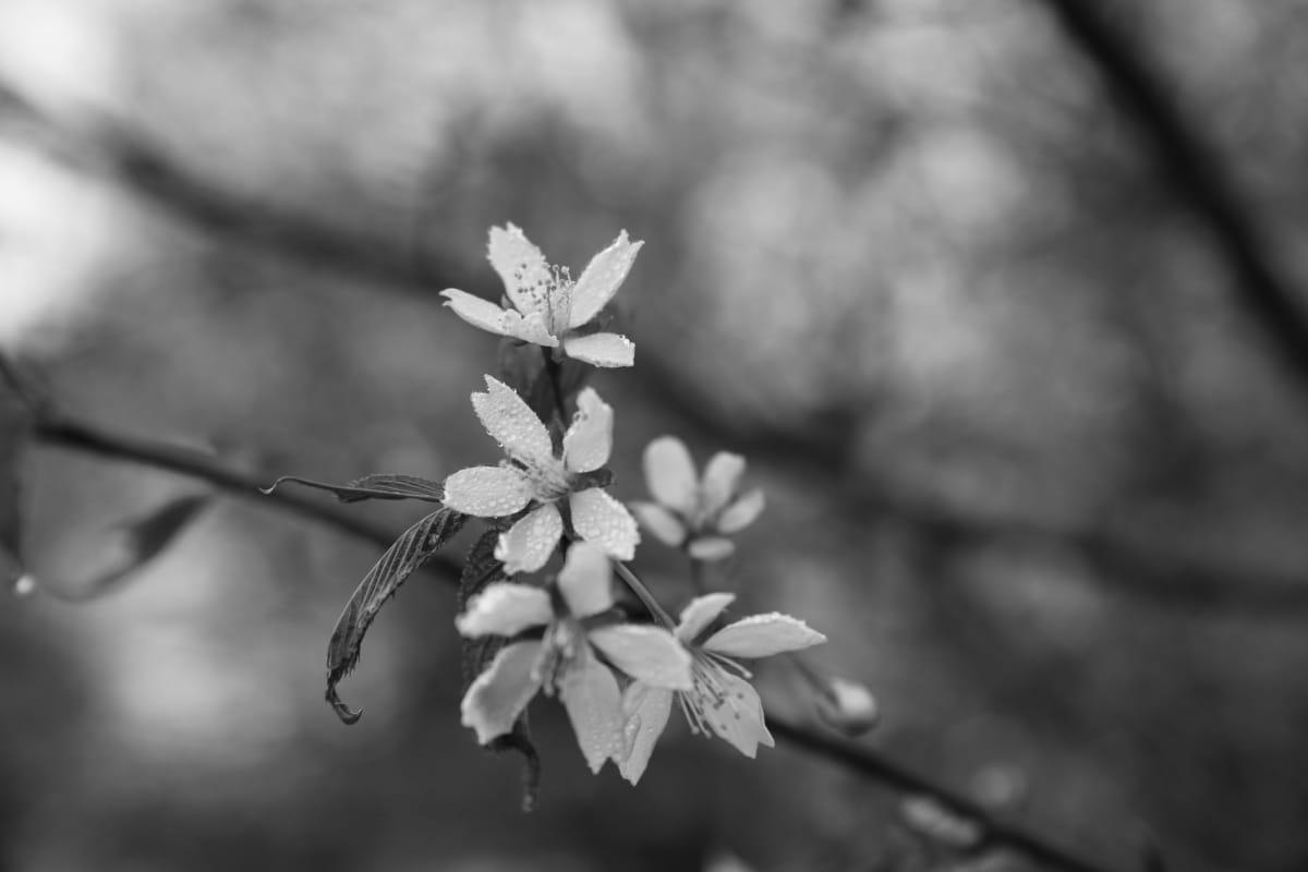 Pirkko Saisio, kukka