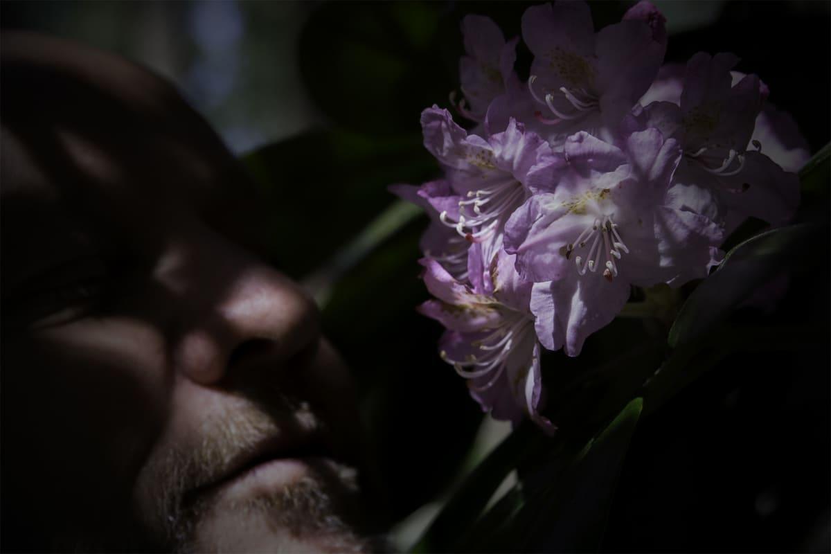Risto Salmela oli tullut Jätkäsaaresta Etelä-Haagaan haistelemaan alppiruusun kukkia.