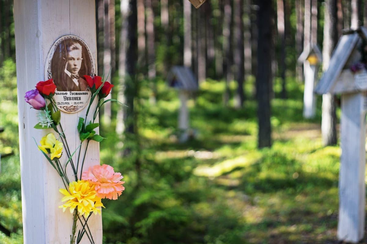Murhattujen muistoristejä Krasnyi borin metsikössä.