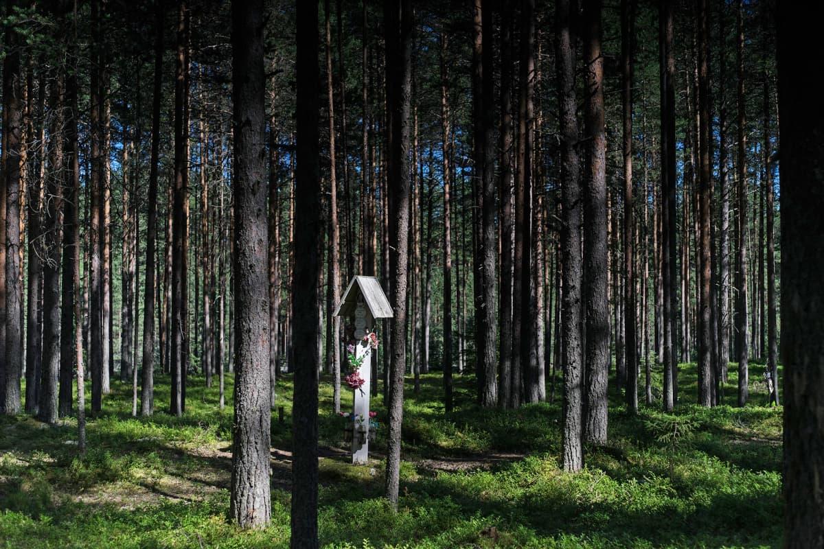 Teloituspaikka metsässä.