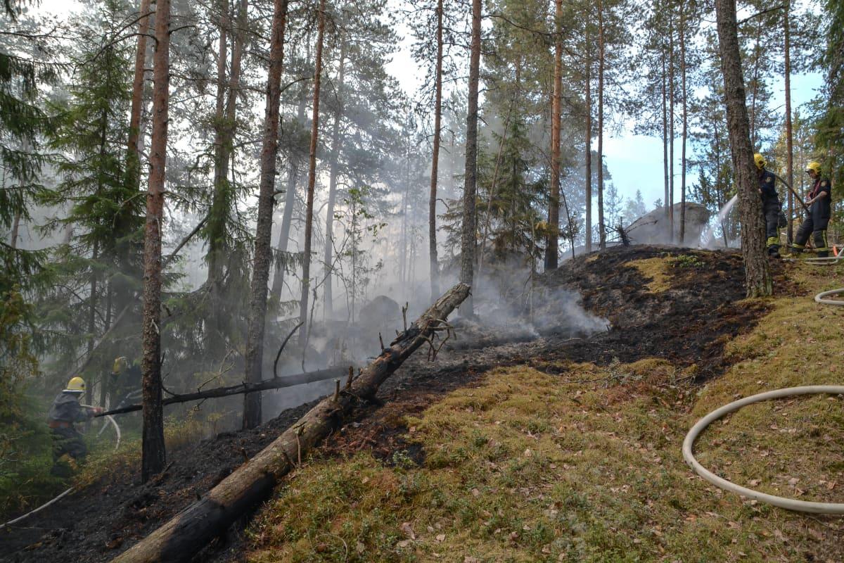 Eftersläckning i Ebboskogen