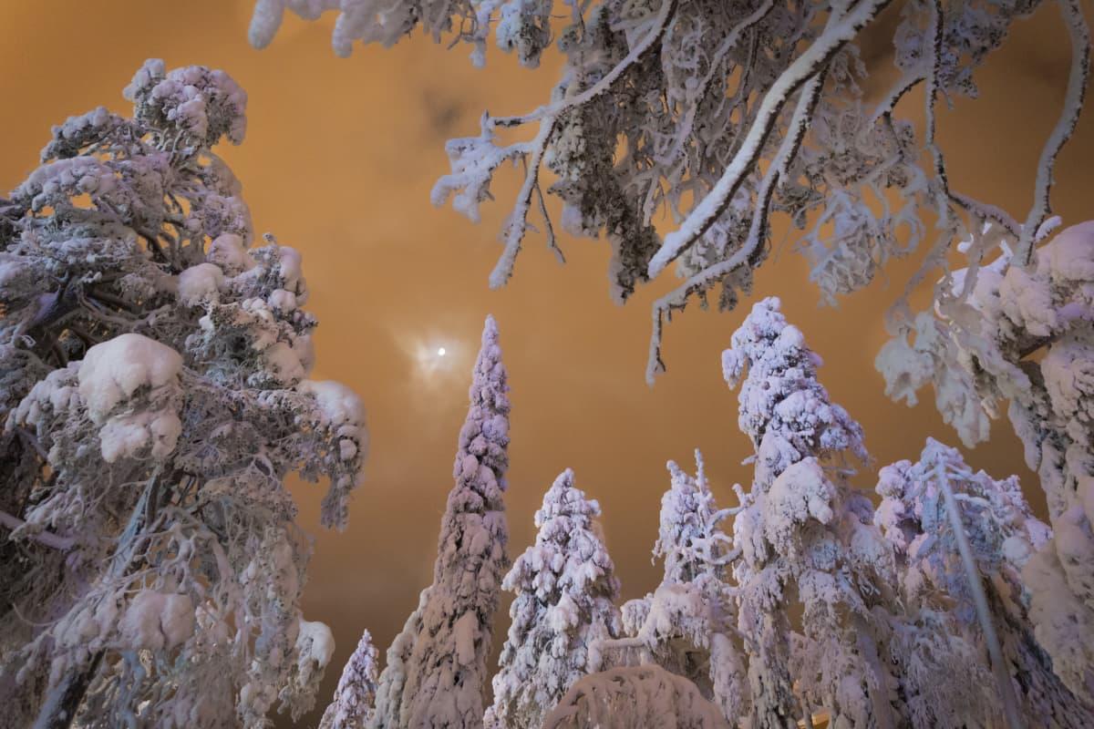 Rukan luminen metsä pimeällä kuunvalossa oranssia taivasta vasten.