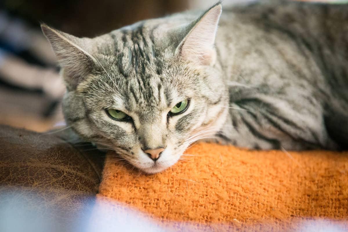 Riina ja Sami Kaarlan kissa.