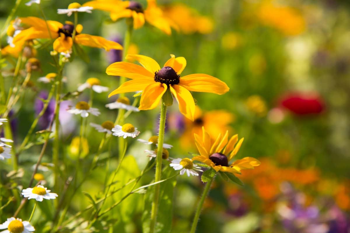 Kukkia Annalan puutarhassa.