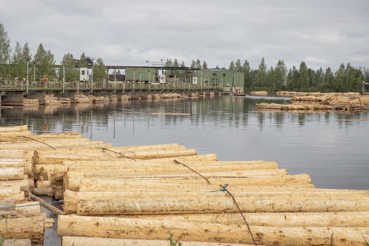 Tukkeja lilluu tukkialtaassa Stora Enson Kiteen sahalla pilvisenä päivänä.