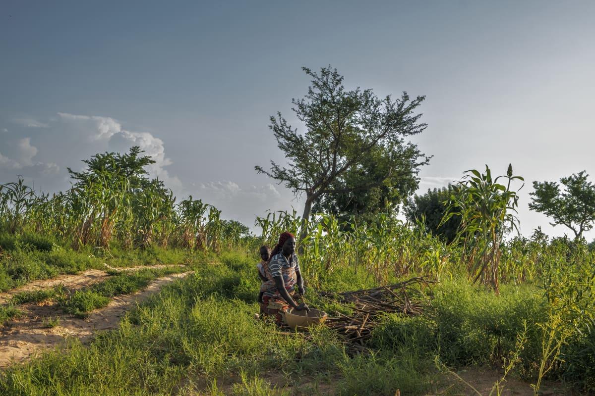 Nainen tekee töitä pellolla lapsi selässään.