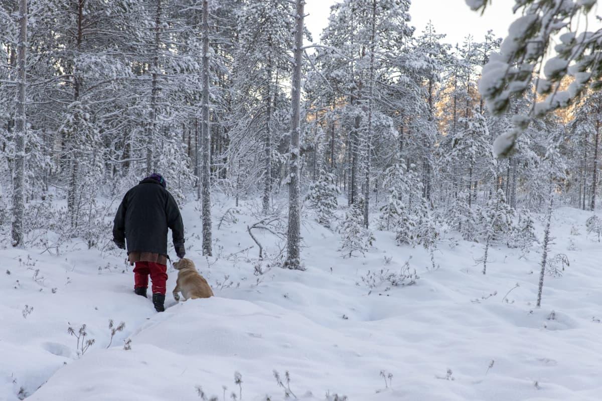 Nainen kulkee lumisella suolla koiran kanssa