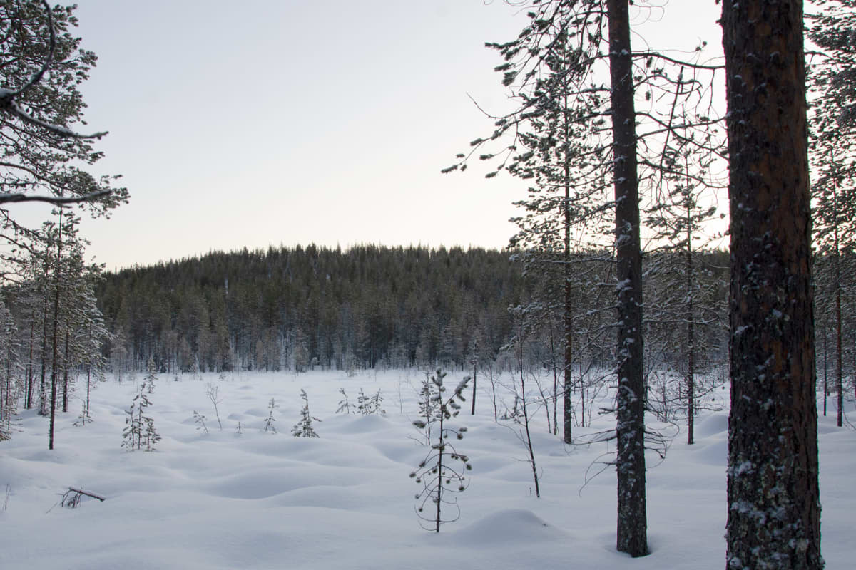 Mäntyvaara pohjoisen suunnasta katsottuna.