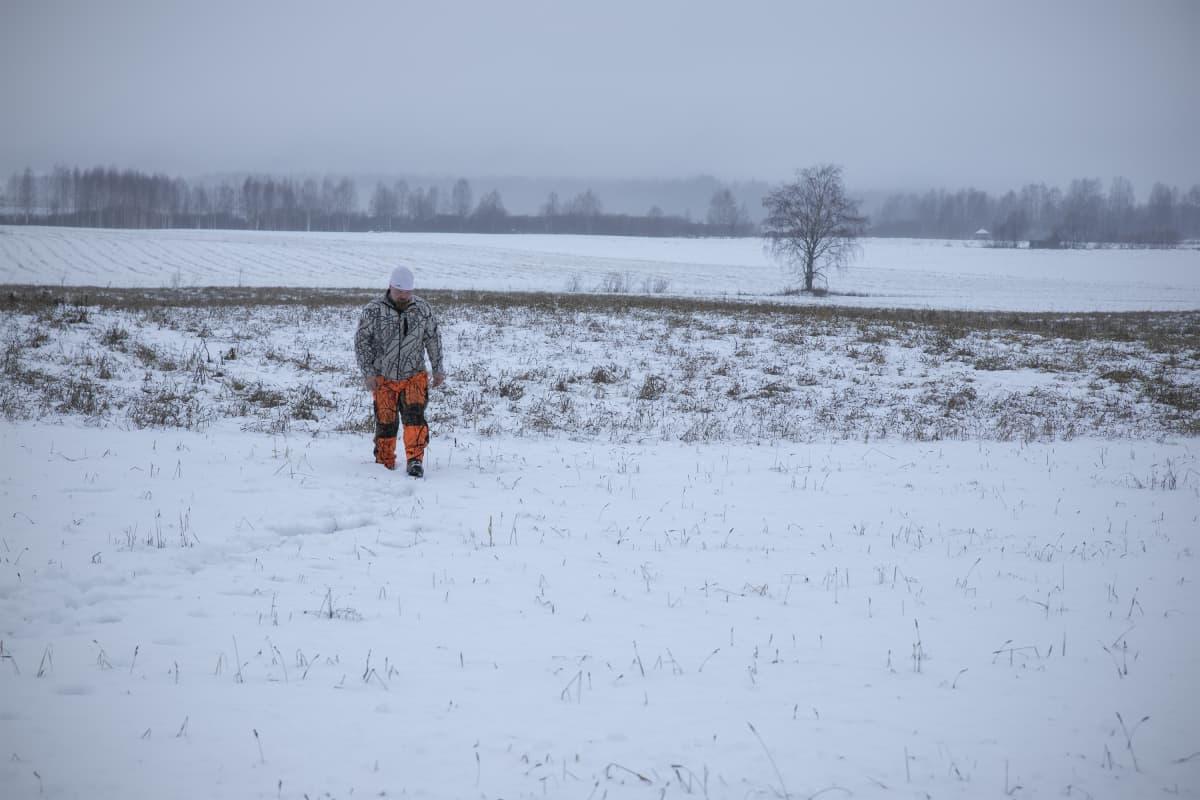 Metsästäjä etsii villisian jälkiä lumiselta pellolta