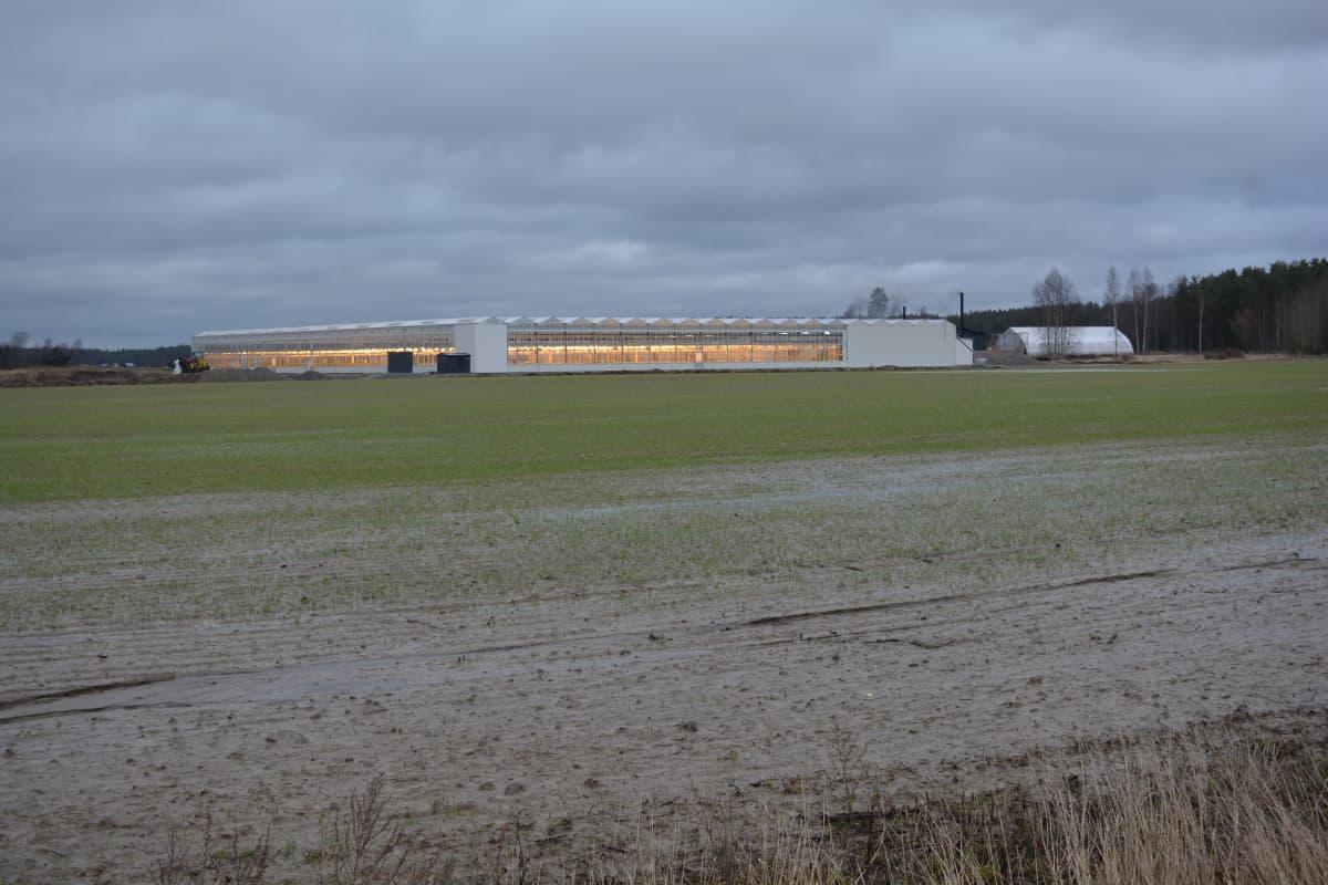 Kotipellon puutarhan uusi kasvihuone keskellä peltoa Mynämäellä.