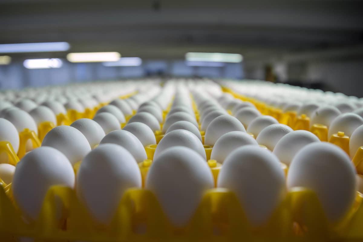 Kananmunia muovikennoissa
