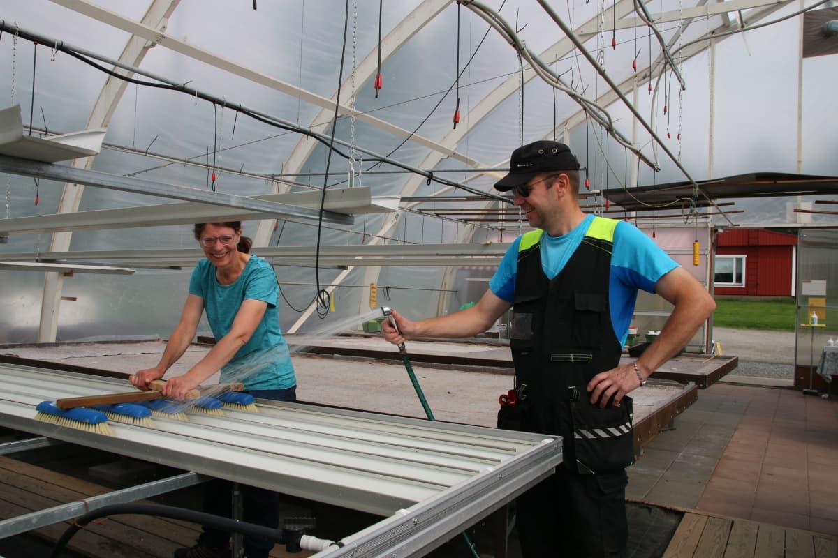 puutarhayrittäjät Marja ja Tarmo Niska pesevät kasvihuonetta myyntisesongin jälkeen kesäkuussa 2020 Niskan puutarhalla Rovaniemellä