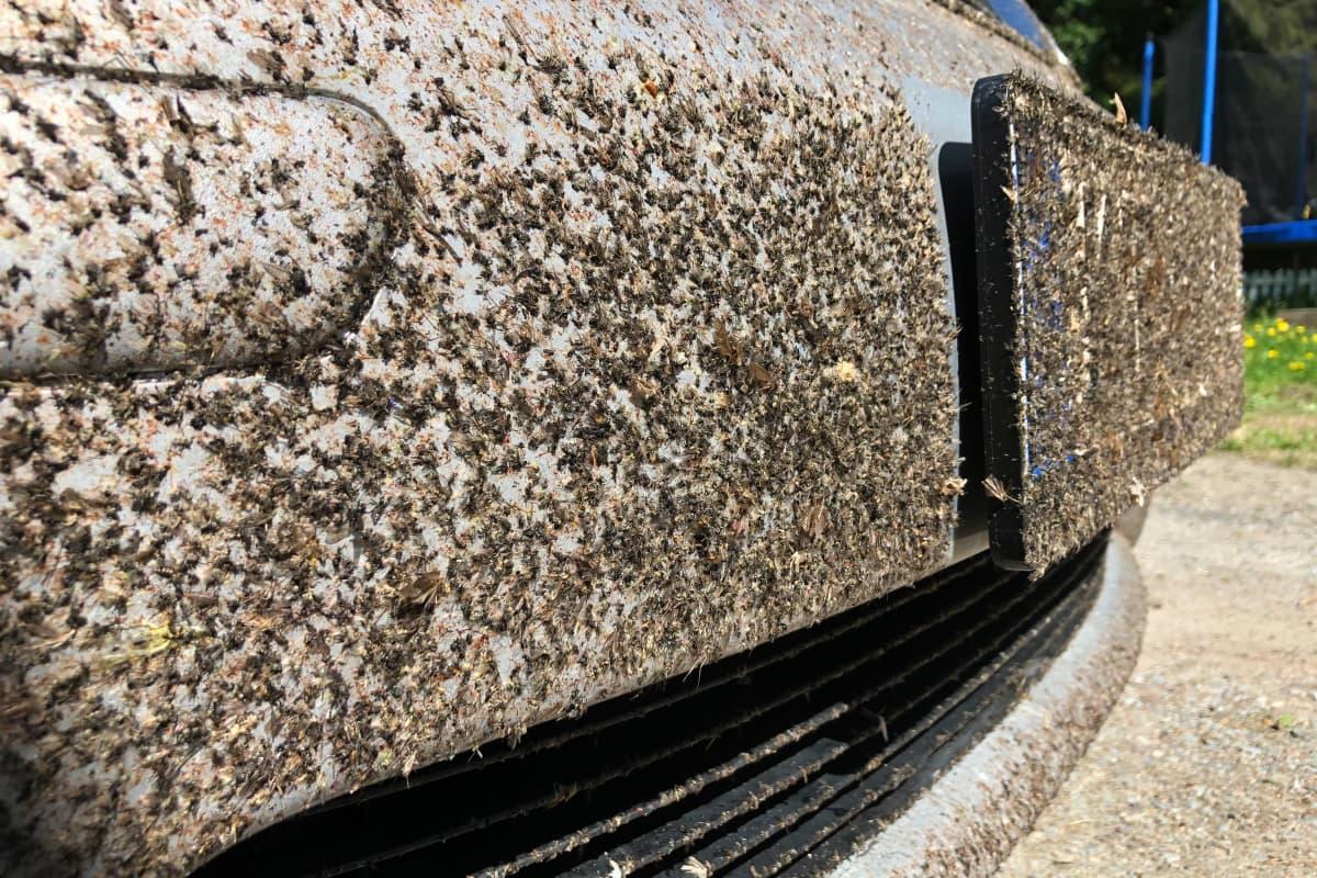 Liiskaantuneita hyönteisiä auton etupuskurissa ihan mattona.