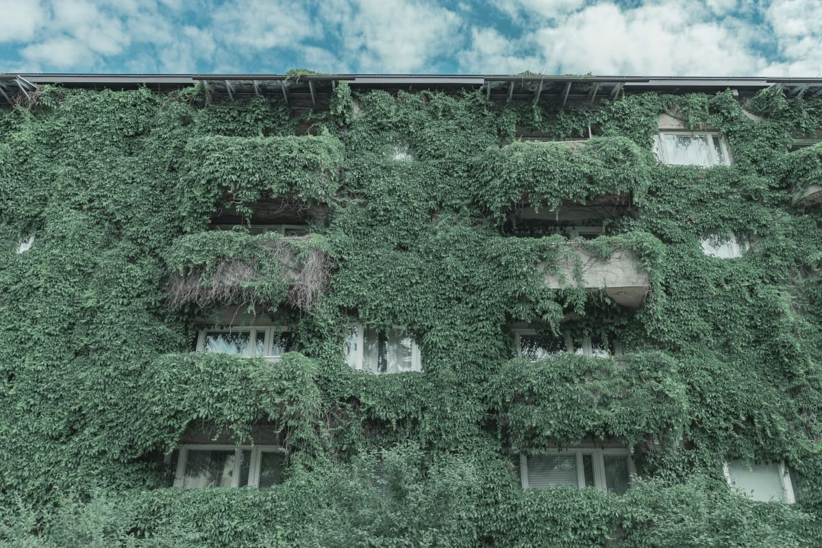 Köynnöskasvi talon seinustalla.