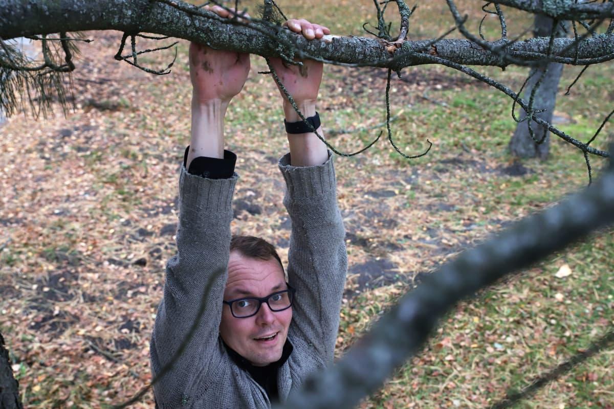 Antti Kairakari riippuu käsiensä varassa sembramännyn oksasta.
