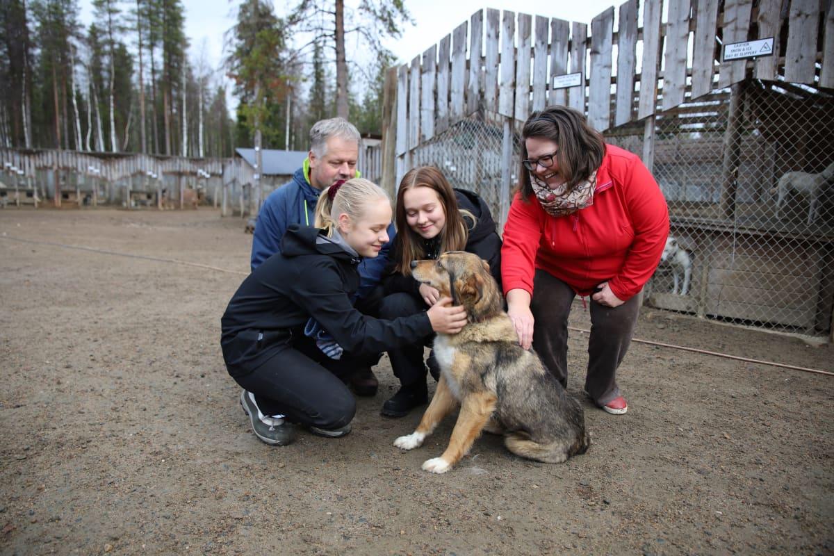 Karjalaisen perhe Arctic Husky Farmilla Pelkosenniemellä