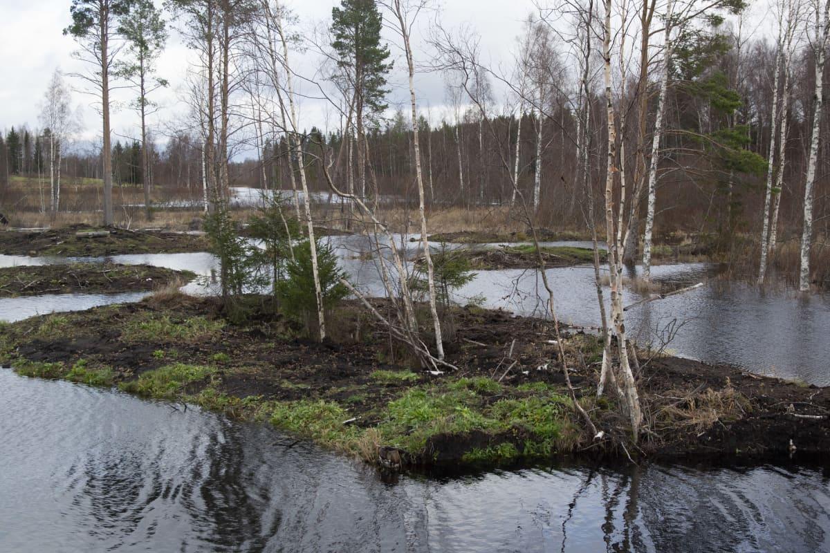 Lokaluoman kosteikko Kuivasjärven valuma-alueella Parkanossa