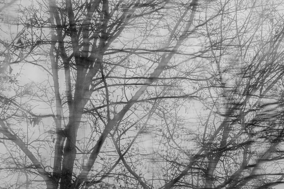 Tuuli ja sade puistelevat puita.