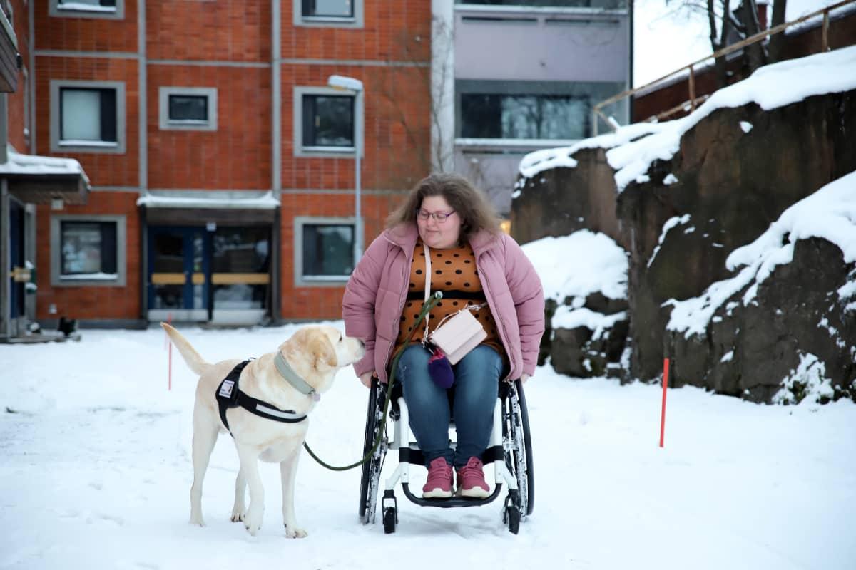 Pyörätuolissa istuva Maarit Bäckman ulkoilee avustajakoiransa Ollin kanssa