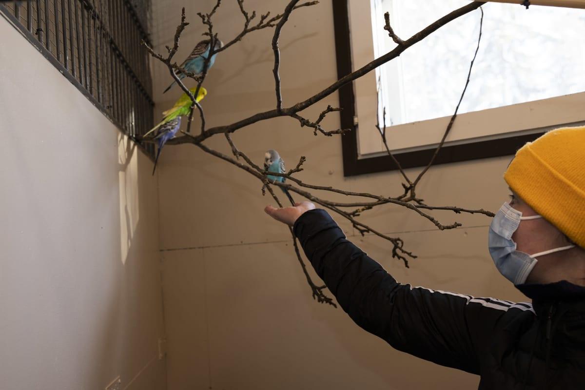 Lemmikkieläinhoitola Rikulan yrittäjä Henna Simonen tarjoaa siemeniä undulaateille.