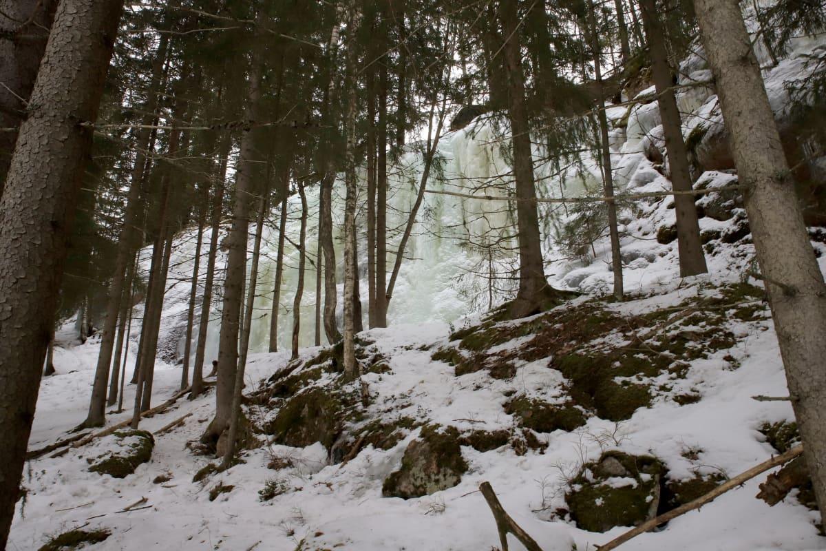 Jääkirkkovuori kuvattuna kauempaa, puita edustalla.
