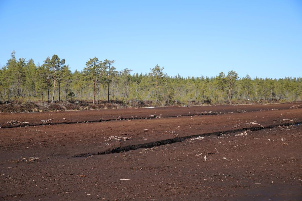 Turvetuotantoalue Jalasjärvellä. Soista metsää takana.