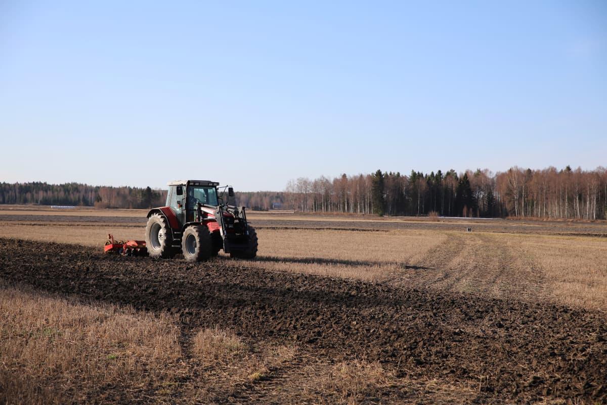 Traktori muokka sänkipeltoa sänkimuokkaimella
