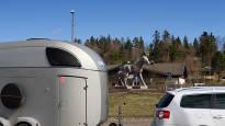 Kunta ratsastaa hevospitäjän imagolla – pikkuruinen Ypäjä on maailmallakin tuttu nimi hevospiireissä