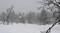 В будущие выходные похолодает, но в Южной Финляндии вряд ли выпадет первый снег
