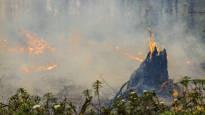 Roskanpoltosta roihahti palo asuinalueen kupeessa – Pelastuslaitos varoittaa: Maasto syttyy nyt erittäin herkästi