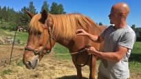 Perhe hankki suomenhevosen valokuvan perusteella – oikuttelevasta Saaga S:stä kasvoi ravikuningatar, joka juoksee nyt valtavia rahasummia
