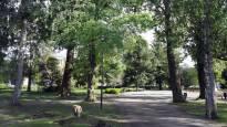 Joensuun keskustassa epäilty rasistinen pahoinpitely: uhrit opiskelijoita – kaupunki ja yliopisto tuomitsevat jyrkästi rasismin