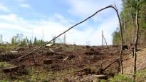 Tehokas metsätalous uhkaa jopa viittä tuhatta eliölajia Suomessa