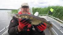 Etelä-Suomen paras kuhavesi takaa himoitulle kalalle kuturauhan –