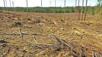 Metsäyhtiö UPM sai vakavan varoituksen – ei olisi saanut hakata valkokankaalta tuttua kuukkelimetsää