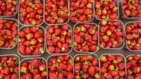 Näin mansikkalaatikon hinta heittelee eri puolella Suomea: halvin torihinta 30 euroa, kallein 48 euroa