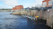 Vaelluskalakantojen elvyttämiseksi jälleen uusi innovaatio: Kaloja putkeen Kalasydämen kautta: