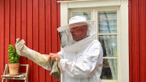 Luvassa poikkeuksellisen raju ampiaiskesä – testaa, tunnistatko pörriäiset