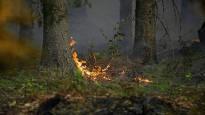 Лесные пожары угрожают Лапландии – с российской стороны огонь начал распространяться в Инари